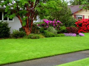 lawn-care-lewis-center-oh