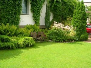 Lawn Treatments Dublin OH